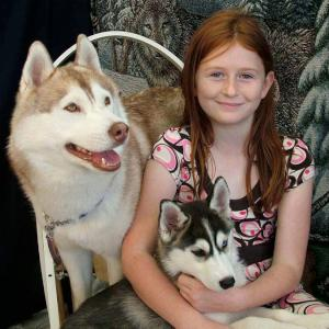 Huskies for photography, petting and Santa's arrival - click for more