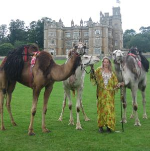 camels at house