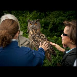Falconry at Amberley Castle images